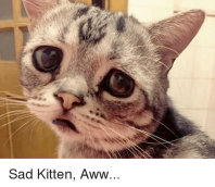 sad-kitten-aww-30286115
